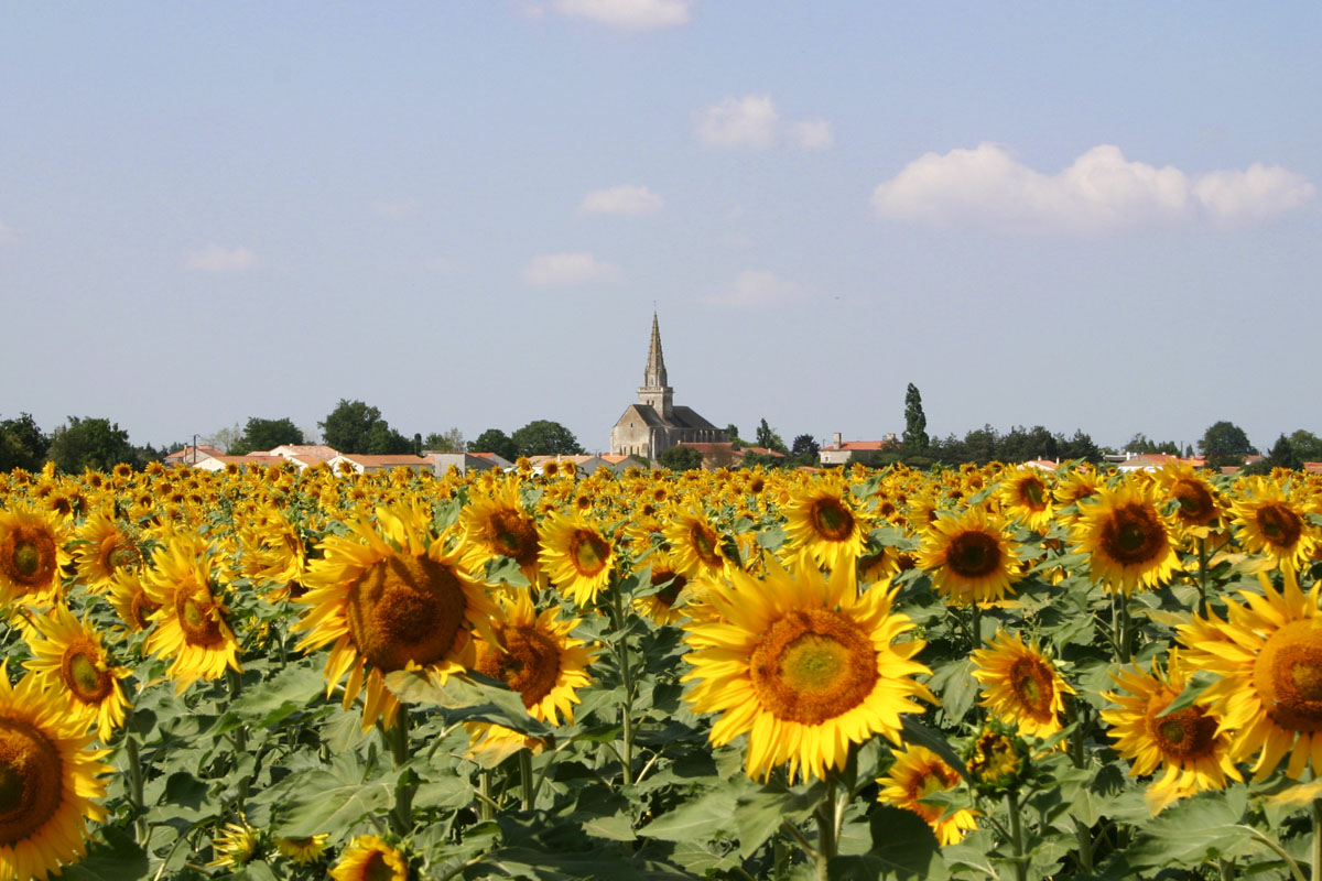 vendee-village-sunflowers.jpg